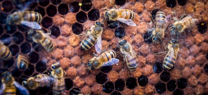 Drie soorten honing uit Vinkeveen zijn erkend als streekproduct.  Foto ter illustratie.
