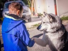 Ceylian, 7 ans et atteint d'un cancer a réalisé son rêve: rencontrer des huskies