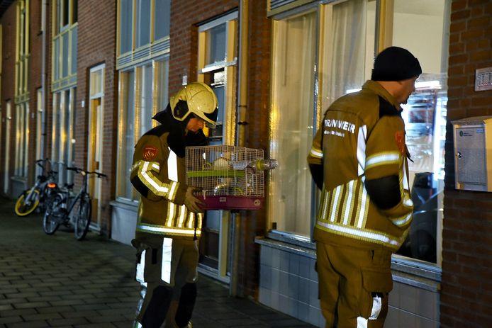 De brandweer brengt de hamsters onder bij een van de buren.