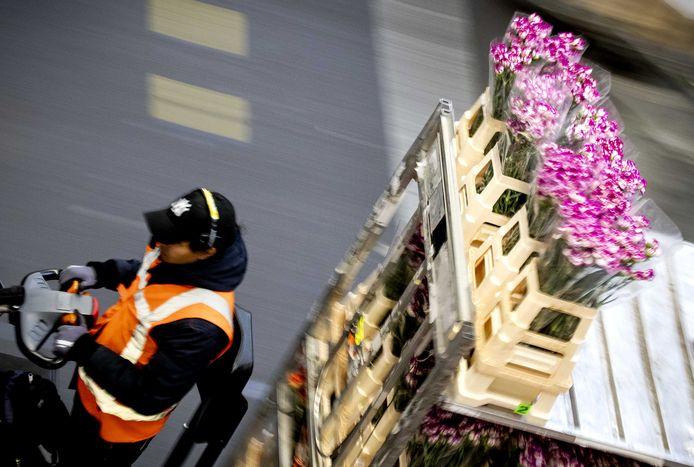 Aanvoer van verse bloemen in de veilinghal van FloraHolland. De bloemen- en plantensector heeft het zwaar, nu de export vanwege de coronacrisis sterk is afgenomen.