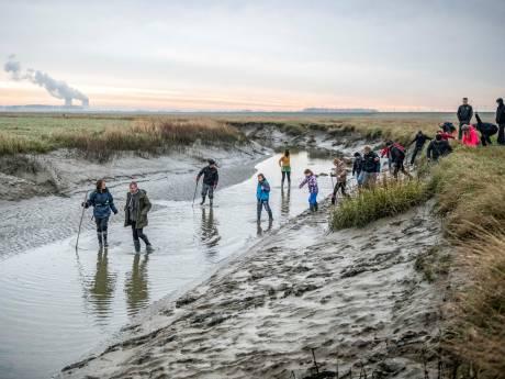 Grote zorgen over effect PFAS op natuur in Saeftinghe