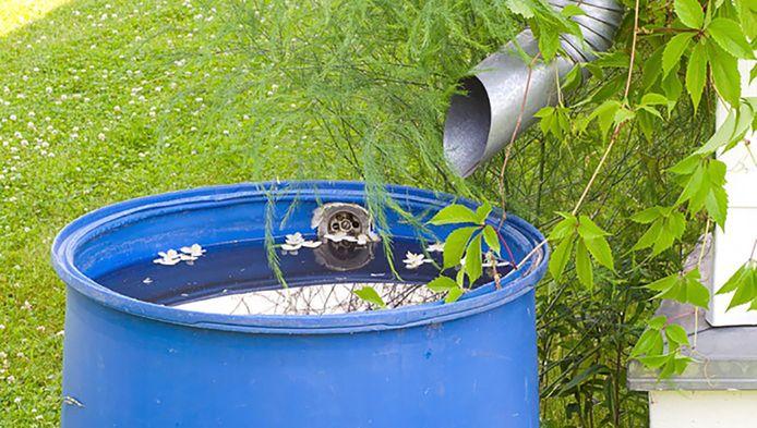 Regenwater opvangen in een regenton