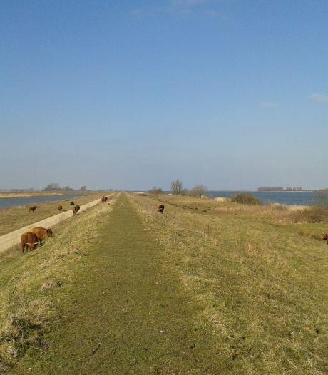 Expeditie Haringvliet keert terug in Willemstad: 'We komen met een extra rondvaart'