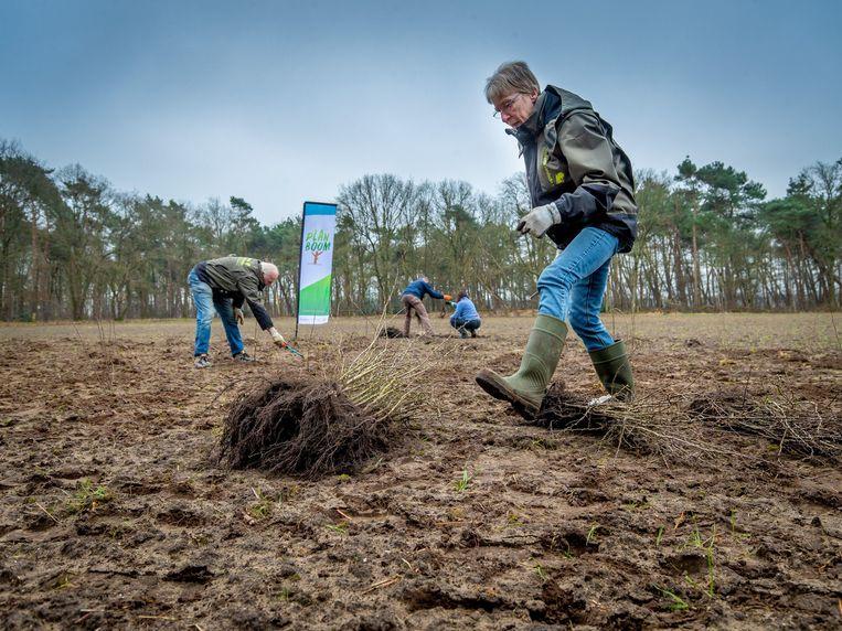 Vrijwilligers planten bomen in Veldhoven als onderdeel van 'Plan Boom' van de Brabantse Milieufederatie, Brabants Landschap en IVN Brabant. Beeld Erik van der Burgt
