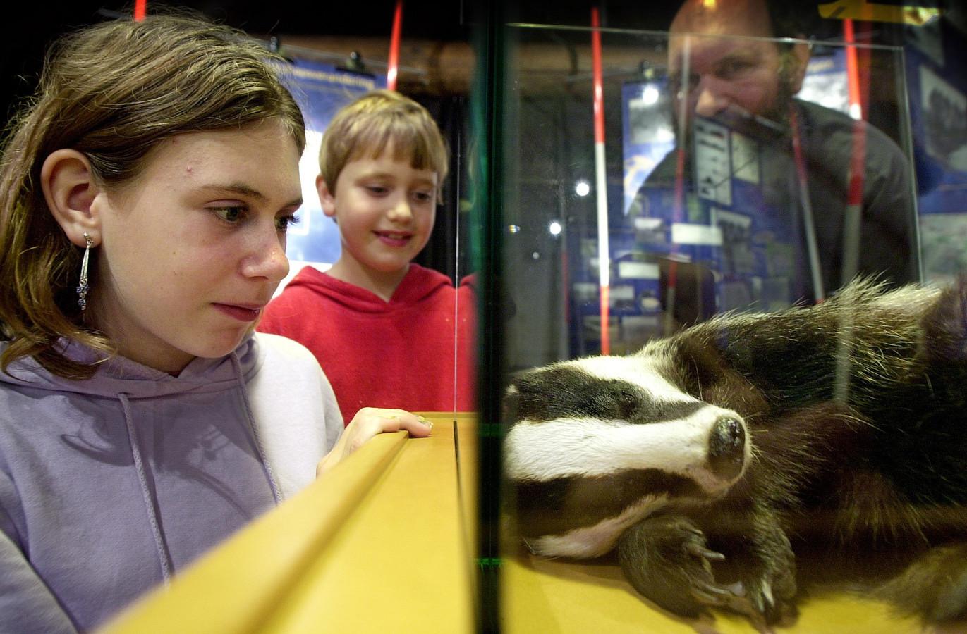 Kinderen bekijken een opgezette das in Natuurcentrum De Maashorst.