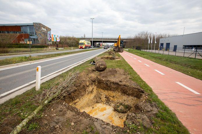 Aan de Tongersestraat in Bilzen zijn de pas aangeplatse boompjes plots weer uitgegraven. Maar er is een goede reden voor.