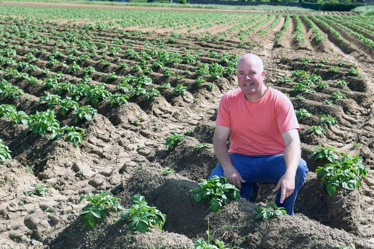 Johan Geleyns op zijn aardappelveld in Wilsele. Als fractieleider bouwde hij een betrouwbare reputatie op in de Leuvense politiek wat hem uiteindelijk een schepenambt opleverde.