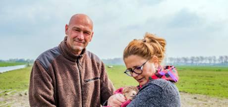 Waarom de bijzondere schapen van Wilco zelfs bij extreme kou gewoon buiten blijven