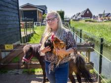 Jonge hanen vaak gedumpt in de Hoeksche Waard: 'Een goede opvang is er niet'