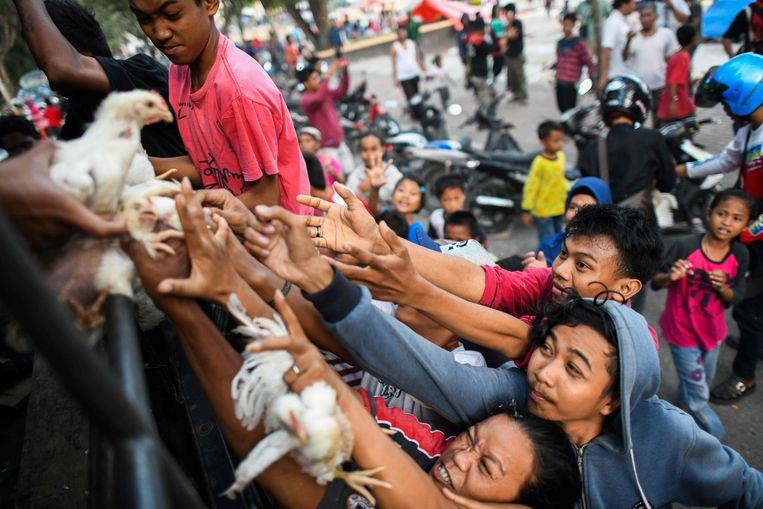 Bewoners van een tijdelijk opvangkamp in Palu verdringen elkaar om een van de levende kippen te bemachtigen die de politie uitdeelt.  Beeld AFP