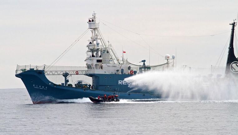 De activisten van Sea Shepherd achtervolgen een groot Japans schip dat op walvissen jaagt. Beeld ap