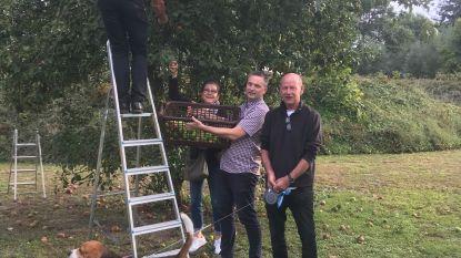 vzw Lichtpunt plukt fruit op gemeentelijk kerkhof en geeft het aan kansarme gezinnen