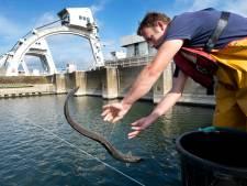 Waterkracht is zelfs in Rivierenland geen echt alternatief
