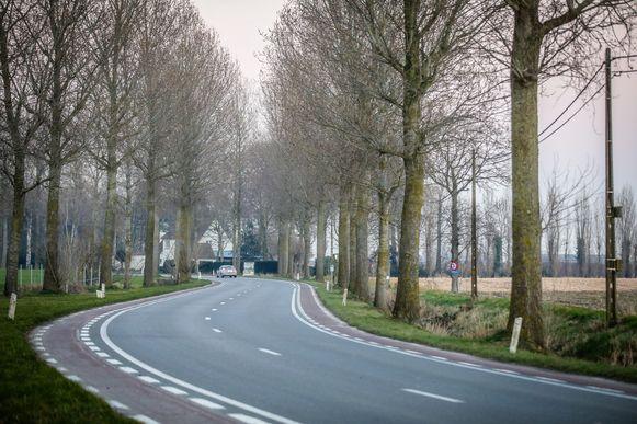 Deze bomen in de Sint Rijksstraat worden tussen 11 en 21 maart gerooid