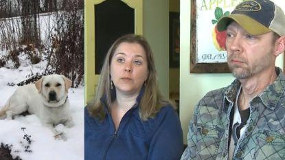 Hun labrador was al weken vermist, tot onbekende losgeld begon te vragen. Nu is viervoeter Lou dood teruggevonden