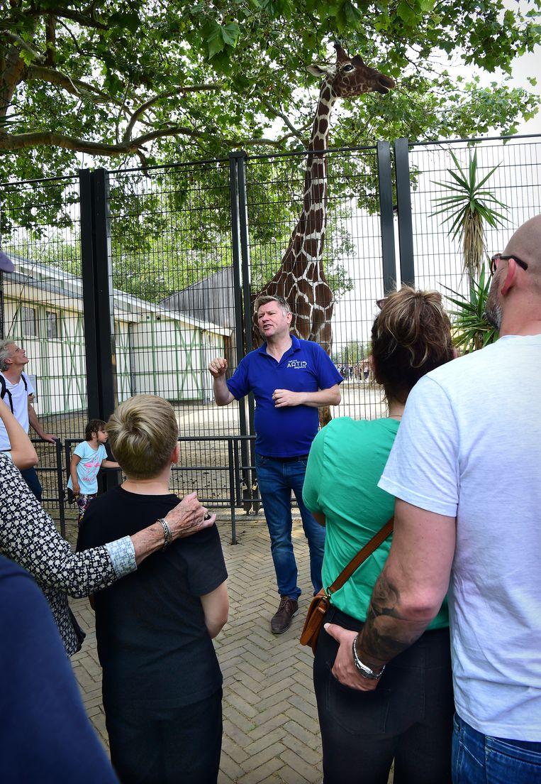 De medewerker van Artis legt uit over de seksualiteit bij giraffen.  Beeld Marcel Van Den Bergh