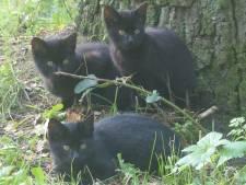Almelose bekommert zich over vier gedumpte kittens