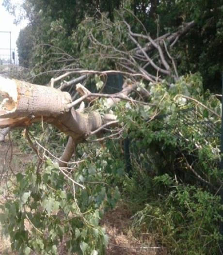 Takken op spoorlijn en rijbaan: 30 bomen langs de Prins Mauritssingel gerooid