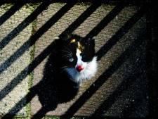 Vijf verhalen achter dierenleedboetes die niet werden betaald: 'Kat verdiende meer liefde dan ik hem toen gaf'