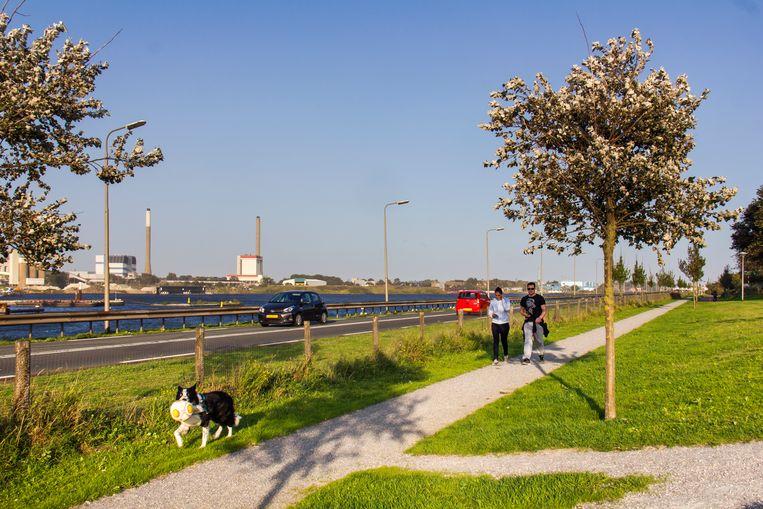 De spoorlijn naar IJmuiden is nu een wandelpad langs het Noordzeekanaal. Beeld Sander Groen