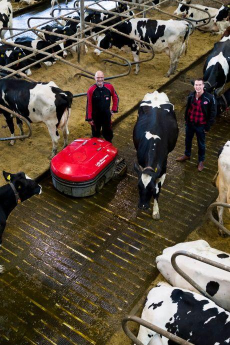Nieuw soort vloer in koeienstal vermindert stikstofuitstoot drastisch: 'Dit is een doorbraak'