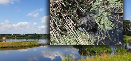 Waarschuwing na vondst 62 dode watervogels in Kristalbad Hengelo: 'Het is echt gevaarlijk hier'
