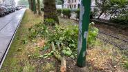 Grote tak valt op tramleiding Mechelsesteenweg: tramverkeer even verstoord