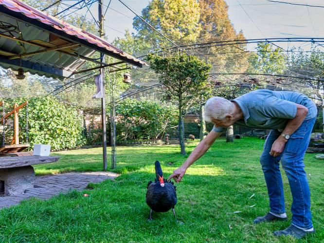 Ad en Corry hebben een tuin met een echte dierenweide: 'Waarom zou ik op vakantie moeten?'