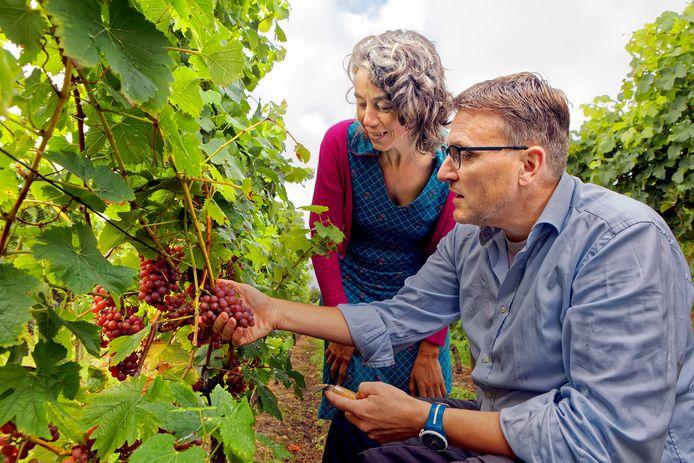 Rudy en Quirien Schellekens uit Made nemen de wijngaard over.