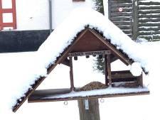 "Brugse kinderboerderij lanceert oproep na sneeuwval: ""Geef vogeltjes te eten"""