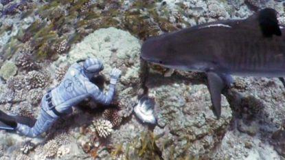 VIDEO. Enorme haai zwemt naar snorkelaar. Met straf trucje laat hij het dier rechtsomkeer maken