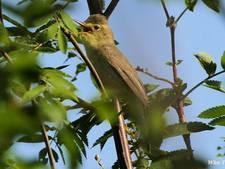Ruim baan voor vogels op het erf en in de tuin