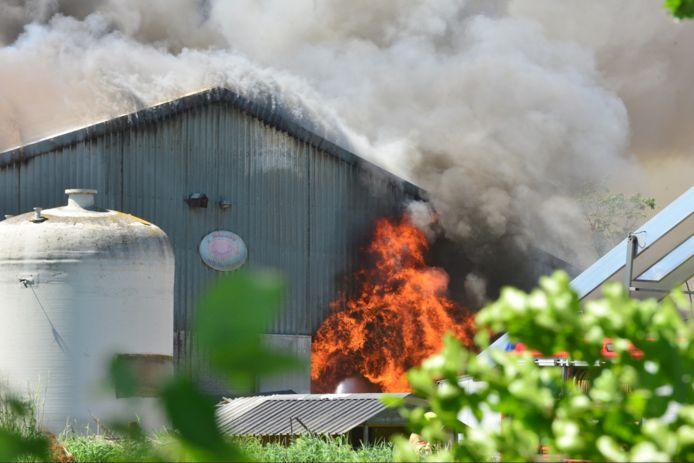 De zeergrote brand in de stal met 4600 varkens.
