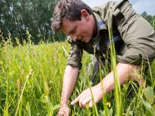 Goed waterbeheer en slim maaien: zeldzame orchidee keert terug op Sallandse Heuvelrug