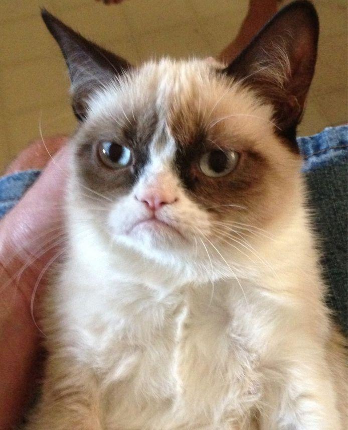 Grumpy Cat is 's werelds beroemdste kat.