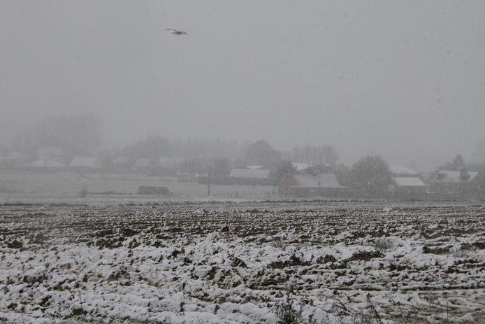 Een dun laagje sneeuw op de akkers, de lucht zwanger van de sneeuw. Op de grens van Lendelede en Izegem