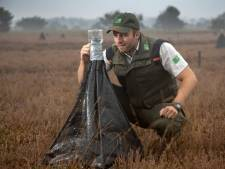 Strabrechtse Heide in Heeze vol 'wigwams' voor onderzoek