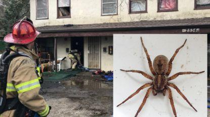 Man probeert spin te doden met aansteker. Diertje vlucht brandend weg en zet flat in lichterlaaie