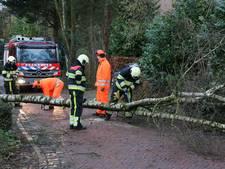 Omgevallen boom verspert weg in Cuijk