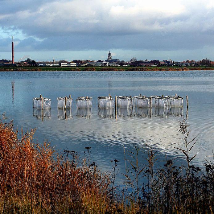 Waterbassins in de Binnenschelde om de waterkwaliteit te verbeteren.