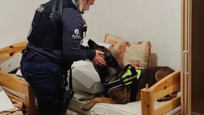 Drugshond van politie Westkust helpt bij coke- en heroïnevangst in Frankrijk