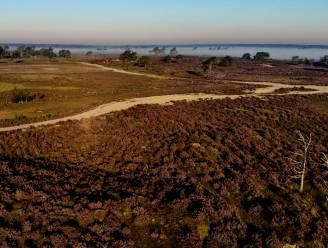 Vlaanderen wil meer nationale parken: GroenRand beschouwt verbinding Kalmthoutse Heide, Groot Schietveld en Klein Schietveld als kanshebber