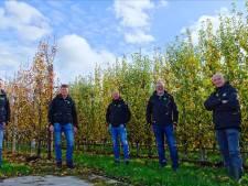 West Betuwe snoeit fruitbomen te laat: 'Diep en dieptriest'