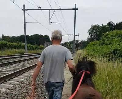 Politie redt pony uit 'levensgevaarlijke situatie' langs spoor bij Prinsenbeek