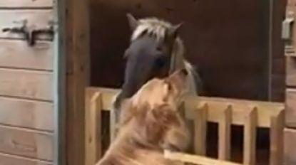 VIDEO. Hond ontfermt zich over verwaarloosd dwergpaard