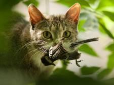 Ecoloog pleit voor proef om los laten lopen van katten strafbaar te maken