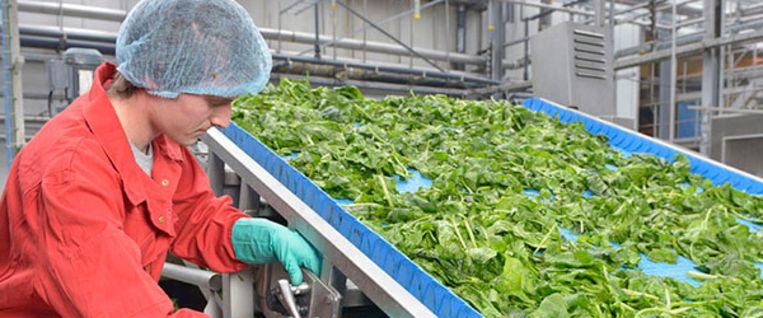 Het West-Vlaamse Greenyard is een wereldspeler in  de handel in diepvriesgroenten.