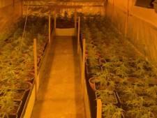 Politie vindt drugs, wietplanten en geld bij invallen in Oud-Beijerland
