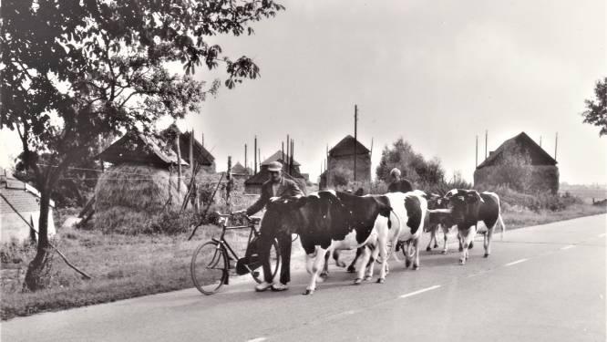 Website Historische Vereniging Hasselt is weer in de lucht