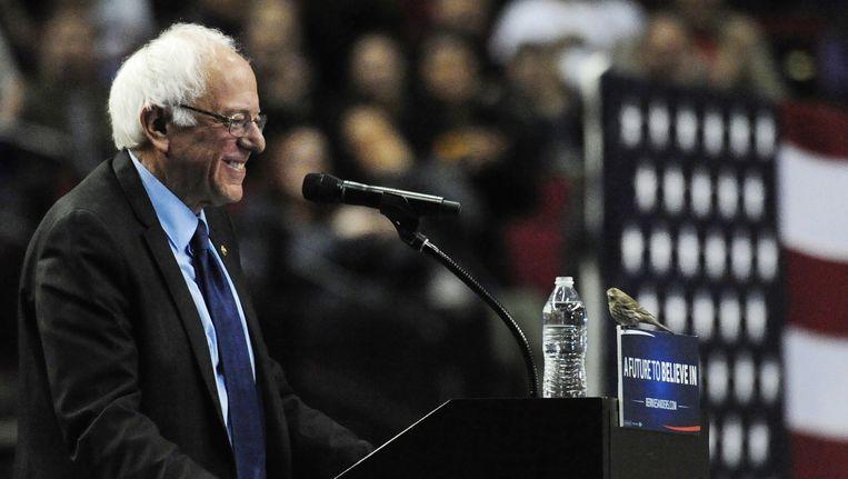 Bernie Sanders lacht als een vogel op zijn spreekgestoelte landt. Beeld ap